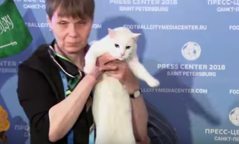 This psychic cat is making World Cup predictions, because this is the world we live in now