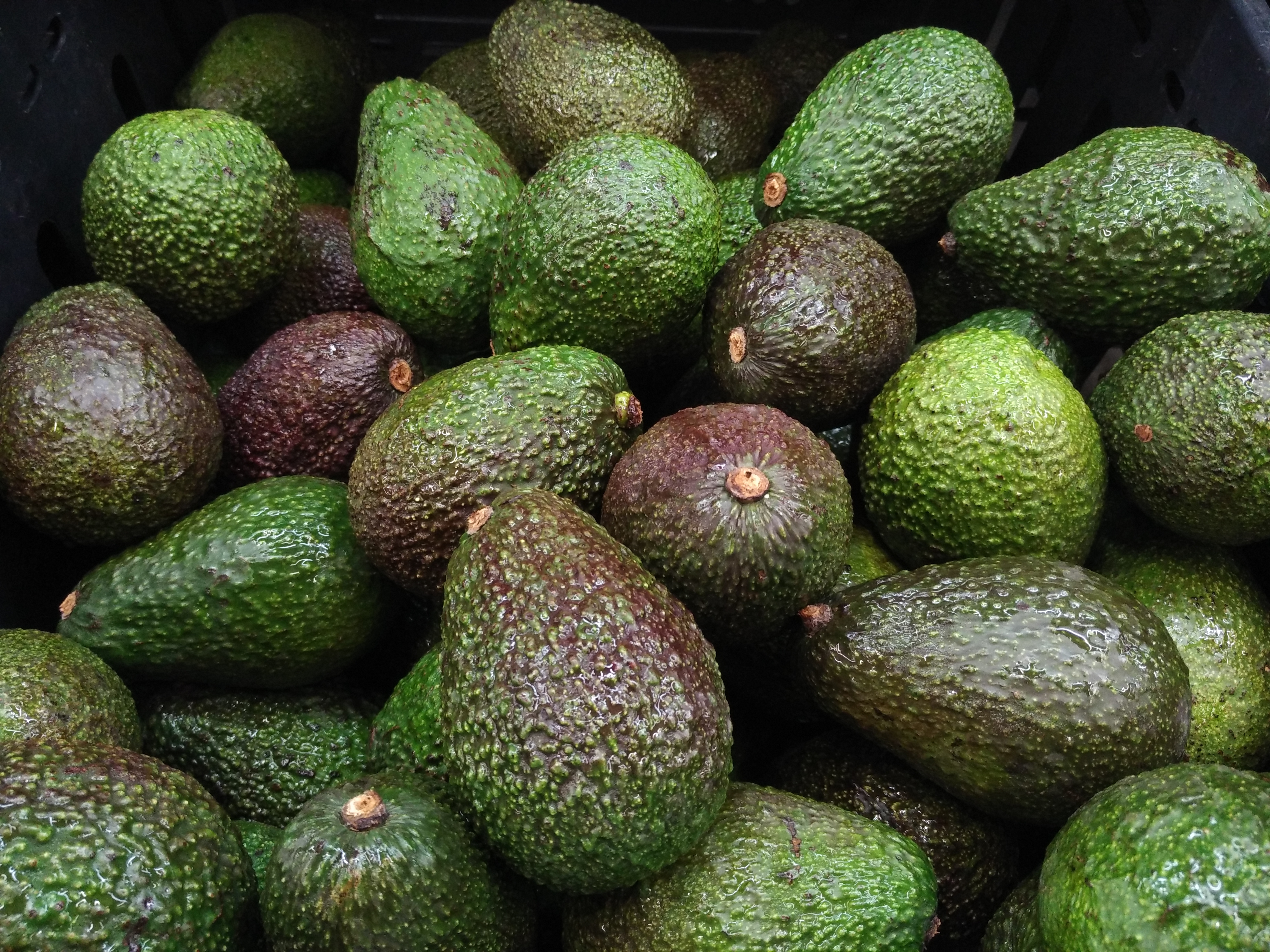 Costco is selling new avocados that last way longer than those regular old avos