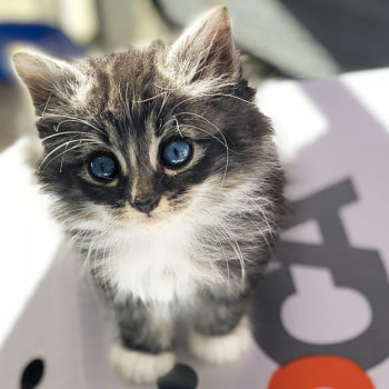 Here's everything you need to know about fostering kittens, because it's like endless cute therapy