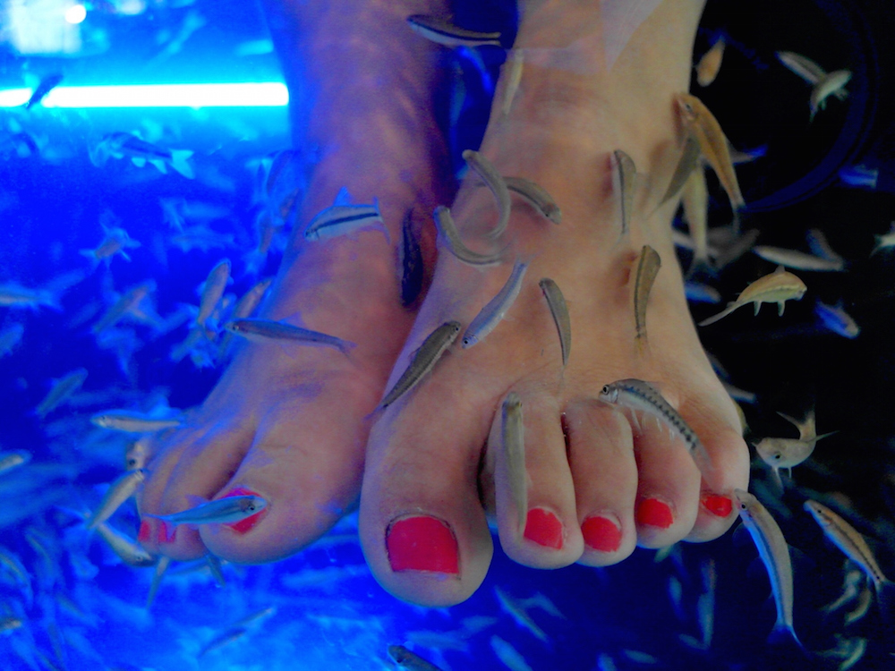 Fish pedicure causes woman to lose her toenails hellogiggles for Fish spa pedicure