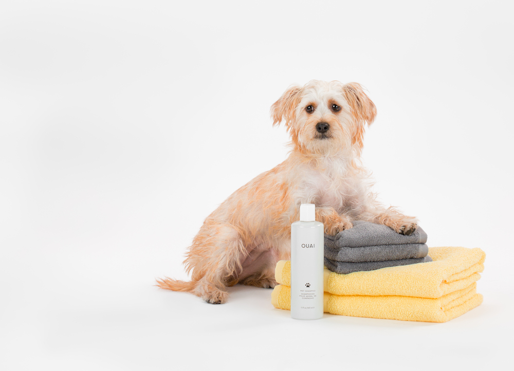 The Kardashians' hairstylist launched a pet shampoo, because your dog deserves celebrity treatment