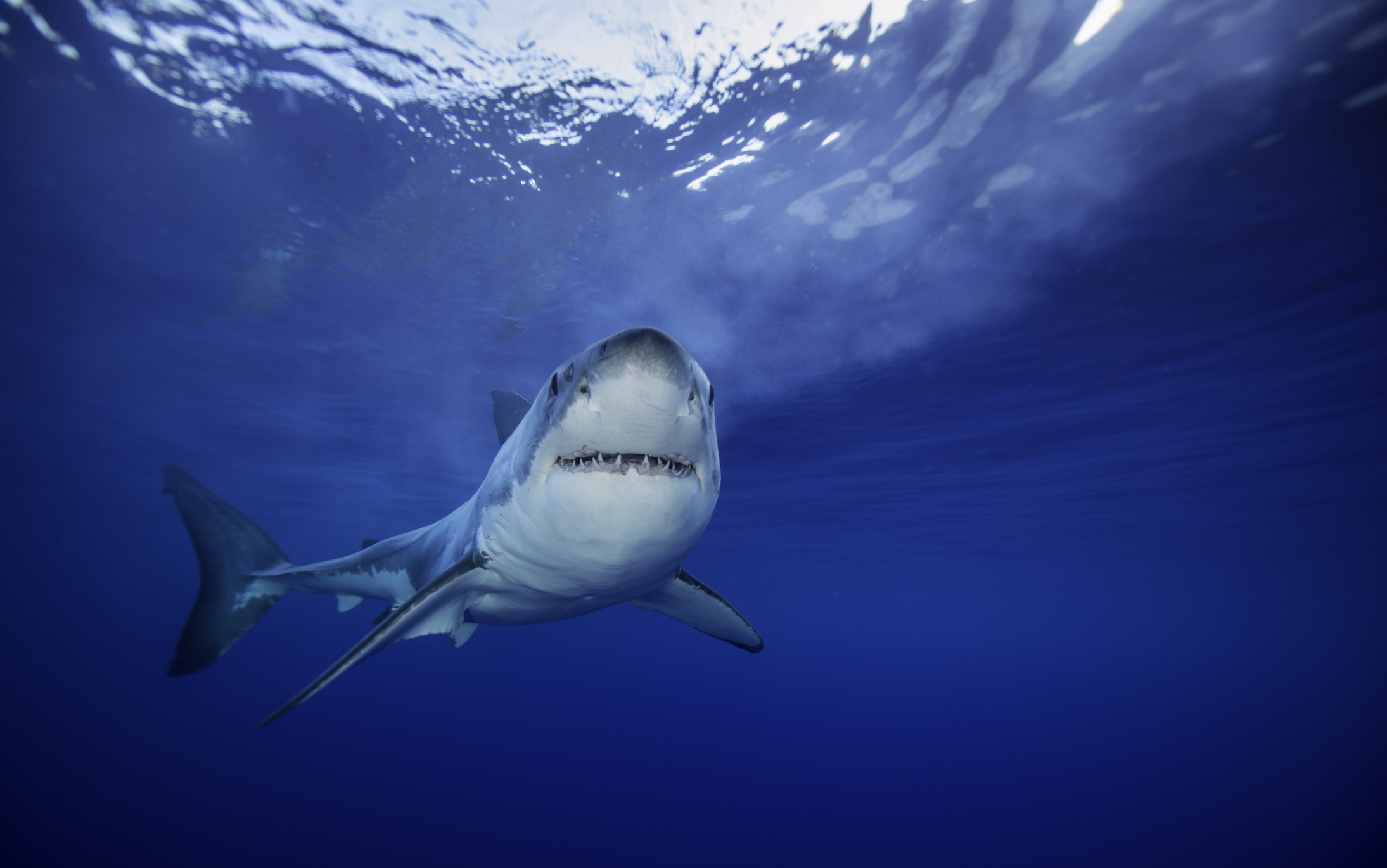 Here's how to stream Shark Week 2018 if you don't have cable