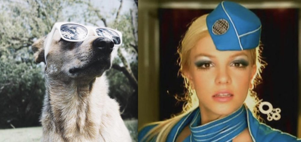 "The internet is convinced this dog is singing Britney Spears' ""Toxic"""