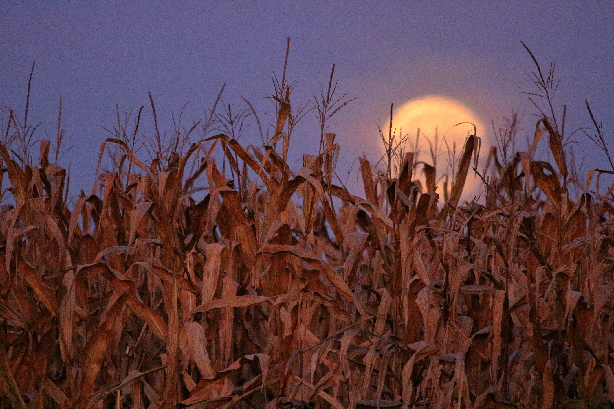 September's Full Corn Moon will rise tonight, so it's time to get your harvest on