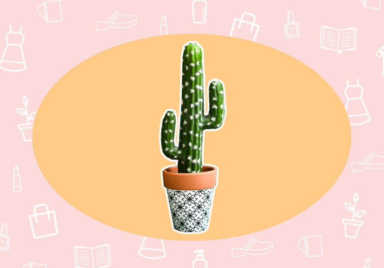 WANT/NEED: A cute fake cactus that you can't accidentally kill, and more stuff you want to buy