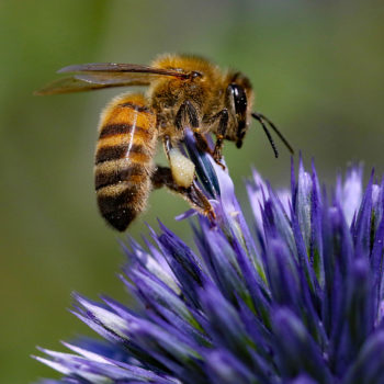 Last summer's total solar eclipse had a very strange effect on bees