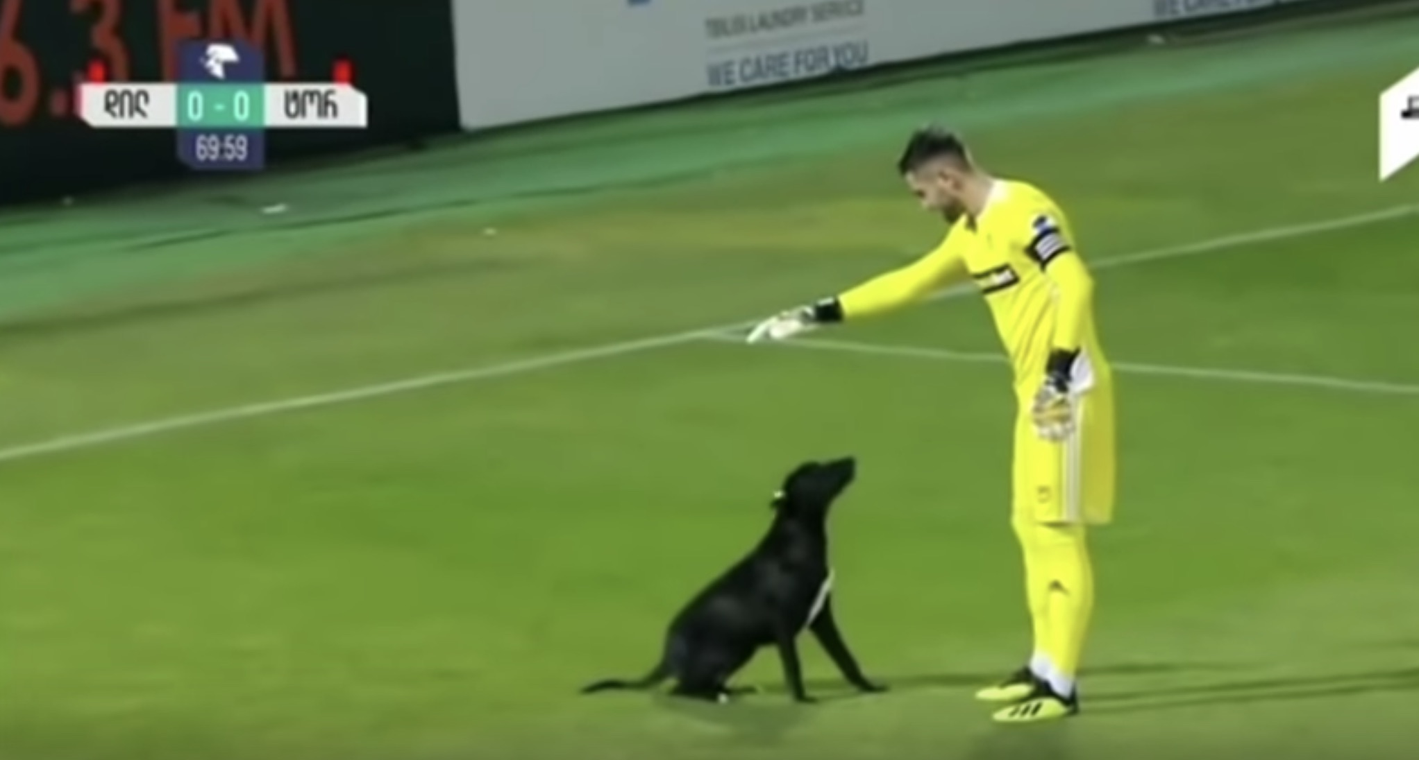 Dog wanders into professional soccer match for belly rubs, video is everything