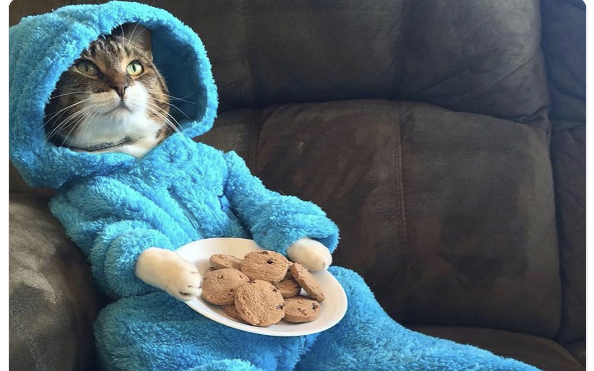 The U.S. State Department accidentally sent out this photo of a cat wearing pajamas