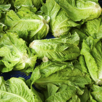 Romaine lettuce has been recalled once again due to a new E. coli outbreak