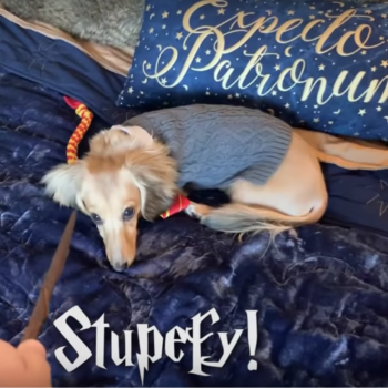 This doggo responds to <em>Harry Potter</em> spells, and the video will brighten your life