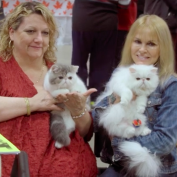 Everything you need to know about Netflix's feel-good cat show documentary