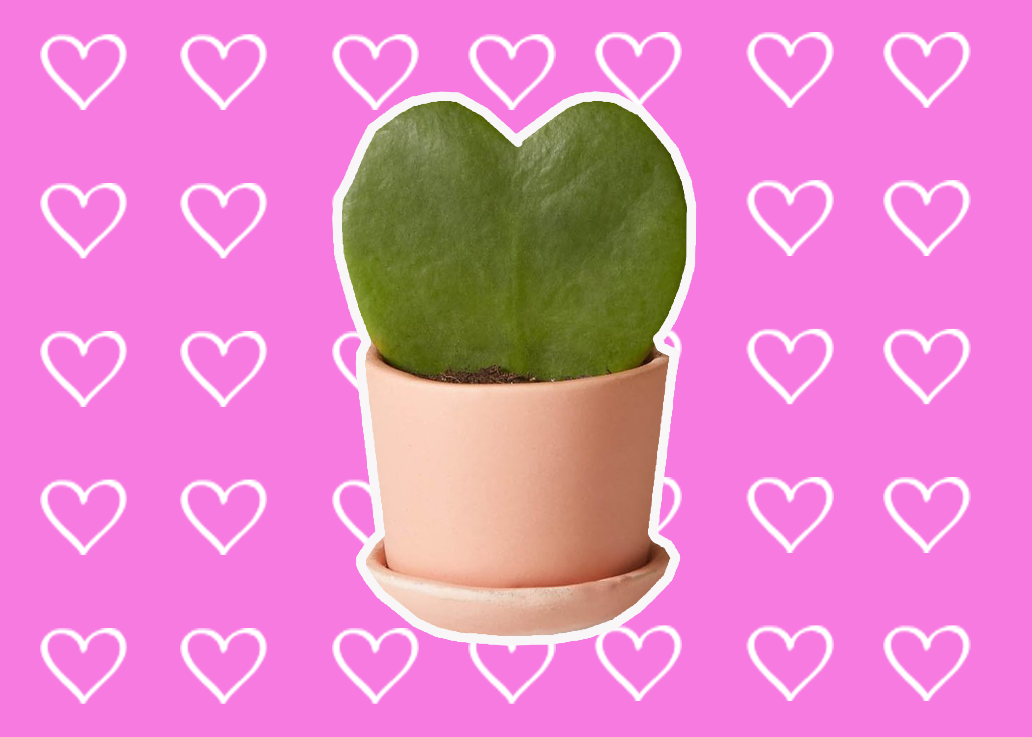 Instead of expensive-ass roses that will die in three days, give your partner one of these cute V-Day plants