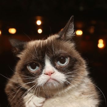 Grumpy Cat has died, and yes, there are lots and lots of memes about it