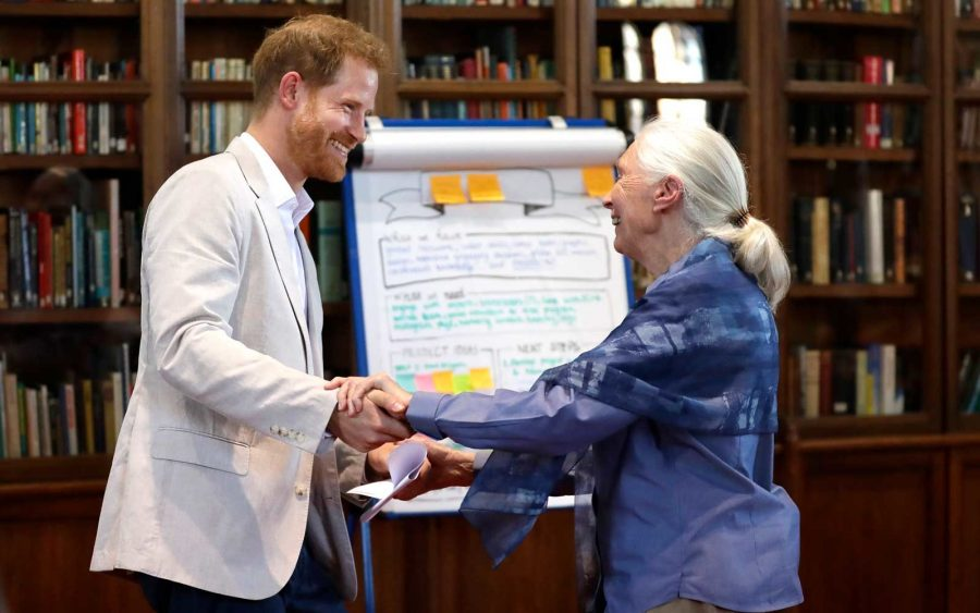 "Prince Harry broke royal protocol by performing a ""chimp greeting"" with Jane Goodall, and it's the cutest thing ever"