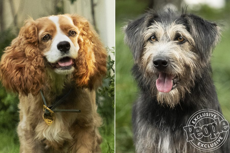 The dogs starring in the live-action <em>Lady and the Tramp</em> remake are SO cute, and their celeb voices are spot on