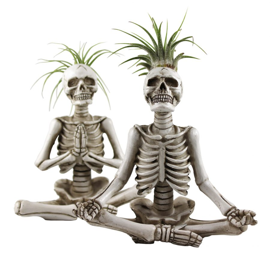 Trader Joe's yoga skeleton succulents are the perfect combination of cute and creepy for Halloween