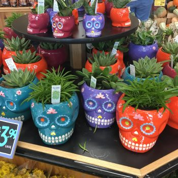 Trader Joe's dropped new sugar skull succulent planters—and they're only $4