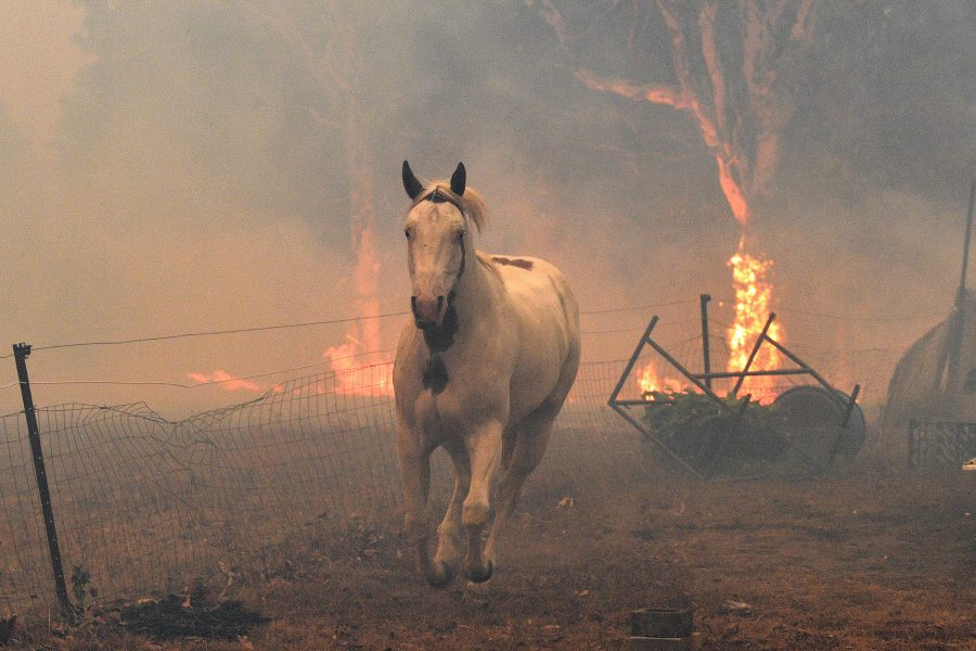 Here's everything you need to know about the fires in Australia—and how you can help