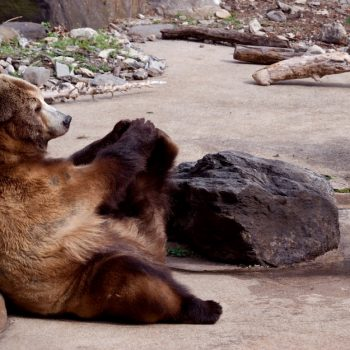 San Antonio Zoo livestream lets you practice yoga with lions, bears, and other creatures